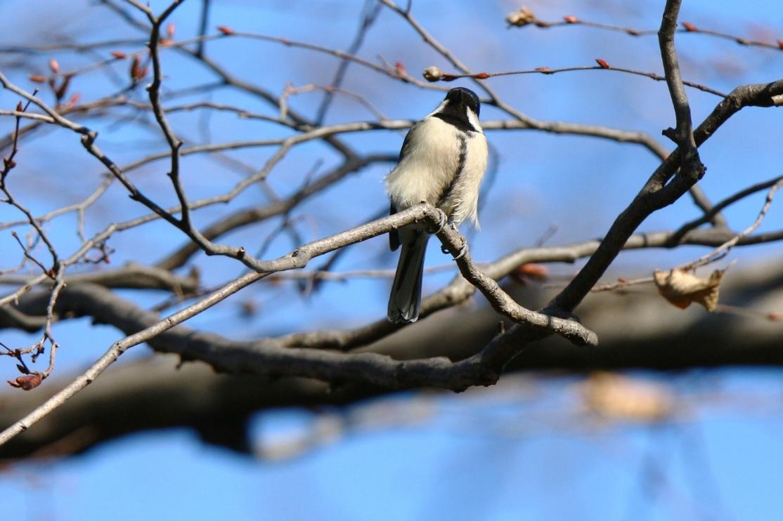 熊野神社の野鳥_e0291438_17543071.jpg
