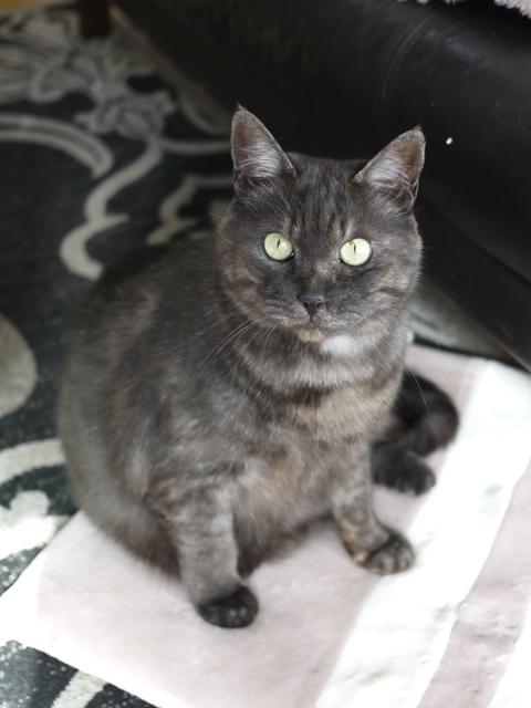 猫のお留守番 マー君くん編。_a0143140_23324690.jpg