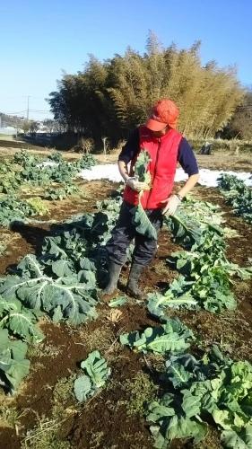 今朝は中村さん福田さんが畑に 厳寒なのに完全防備で・・・ありがとうございます_c0222448_12434911.jpg