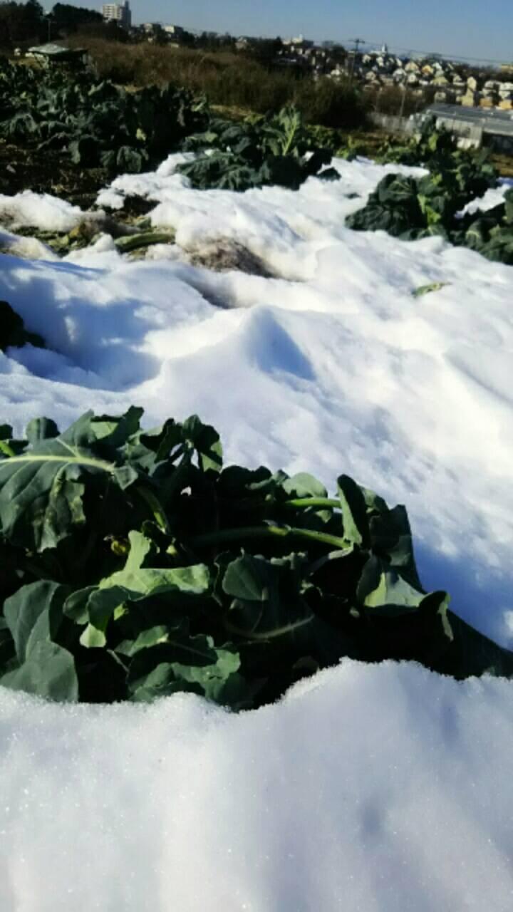 今朝は中村さん福田さんが畑に 厳寒なのに完全防備で・・・ありがとうございます_c0222448_12451586.jpg