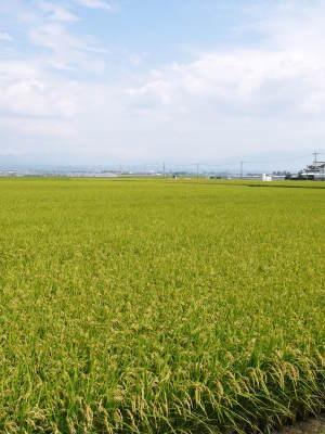 七城米大好評発売中!長尾農園さんは平成30年度の米作りをスタートしました!天地返しの様子(2018後編)_a0254656_17242522.jpg