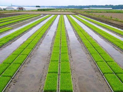 七城米大好評発売中!長尾農園さんは平成30年度の米作りをスタートしました!天地返しの様子(2018後編)_a0254656_17313004.jpg