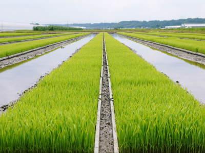 七城米大好評発売中!長尾農園さんは平成30年度の米作りをスタートしました!天地返しの様子(2018後編)_a0254656_17330125.jpg