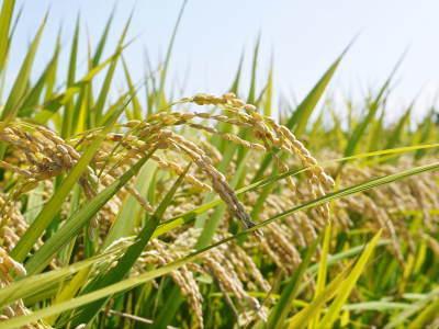 七城米大好評発売中!長尾農園さんは平成30年度の米作りをスタートしました!天地返しの様子(2018後編)_a0254656_17411904.jpg