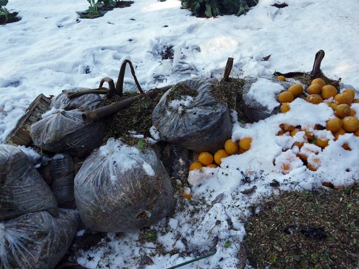 大雪と今季最強の寒波襲来でサトイモが心配だ1・24_c0014967_09011561.jpg