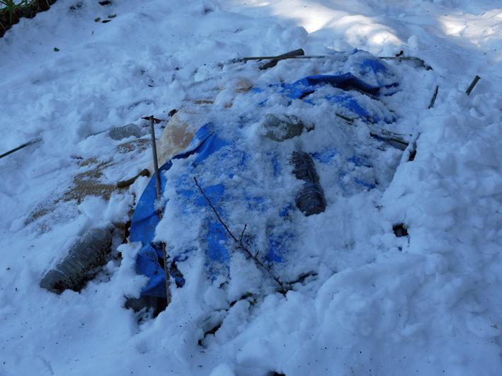 大雪と今季最強の寒波襲来でサトイモが心配だ1・24_c0014967_09014724.jpg