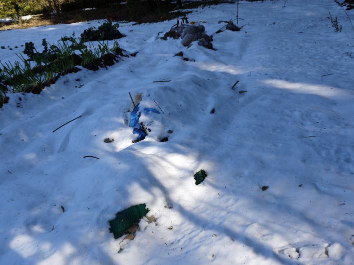大雪と今季最強の寒波襲来でサトイモが心配だ1・24_c0014967_8574055.jpg