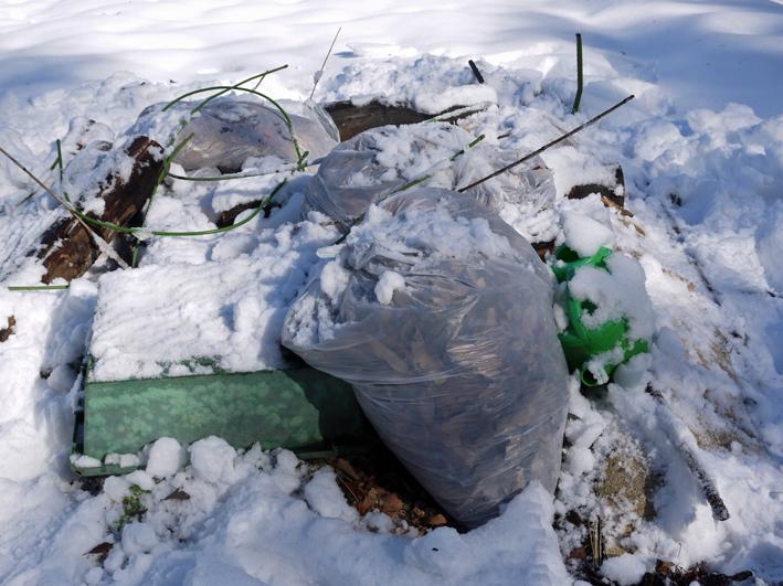 大雪と今季最強の寒波襲来でサトイモが心配だ1・24_c0014967_8581316.jpg