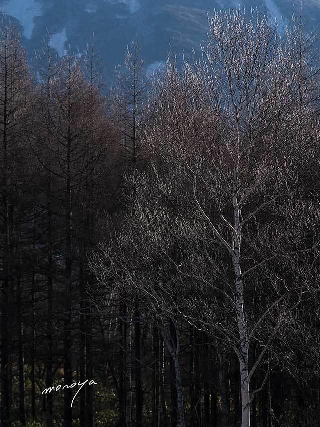 雨氷と霧氷と彩雲と白い虹_c0085877_06304851.jpg