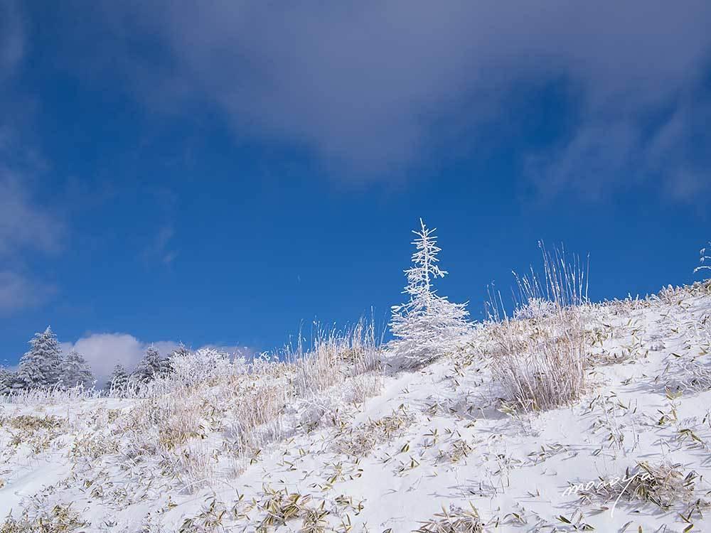 雨氷と霧氷と彩雲と白い虹_c0085877_06431459.jpg