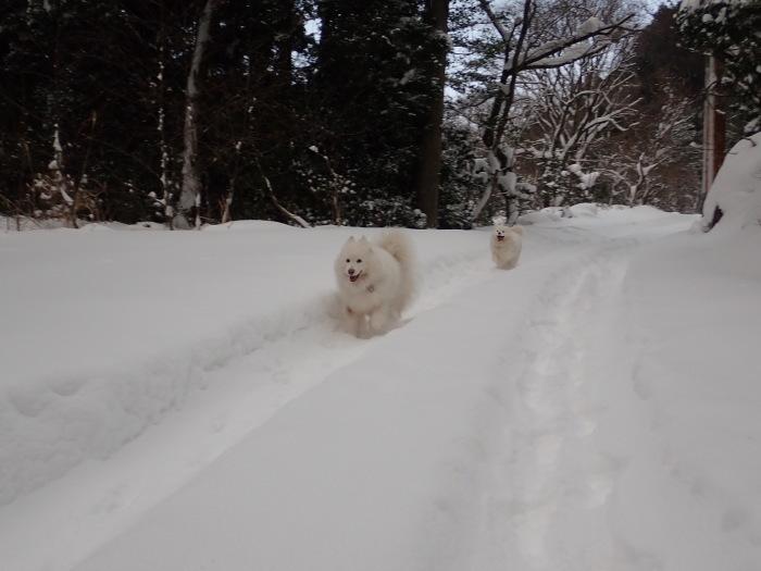 朝散歩は西のお山へ♪_a0049296_08482793.jpg