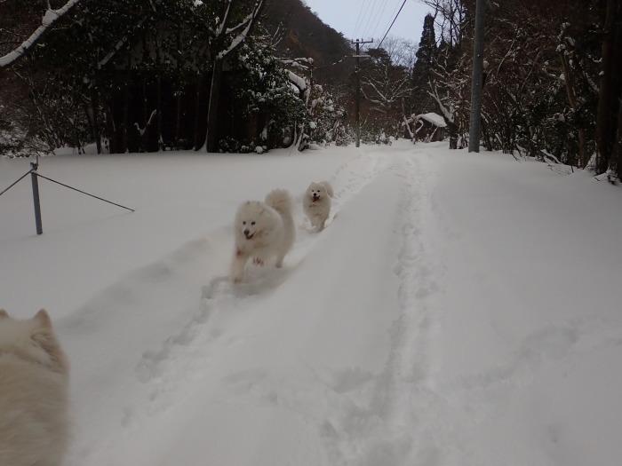 朝散歩は西のお山へ♪_a0049296_08484547.jpg