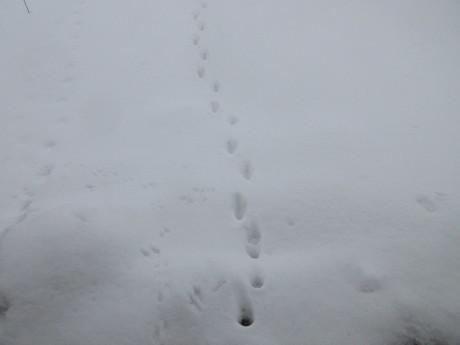 雪、やや落ちついた日_a0203003_22554167.jpg