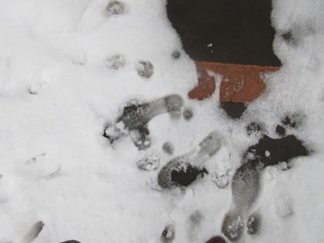 雪、やや落ちついた日_a0203003_22560577.jpg