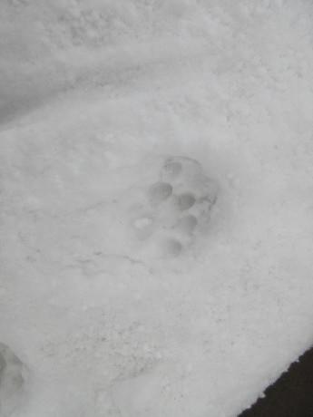 雪、やや落ちついた日_a0203003_22562632.jpg