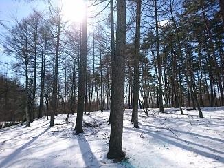週末は更なる寒さ、しびれます↓↓_d0091909_14162435.jpg
