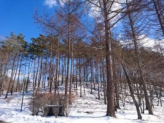 週末は更なる寒さ、しびれます↓↓_d0091909_14162450.jpg