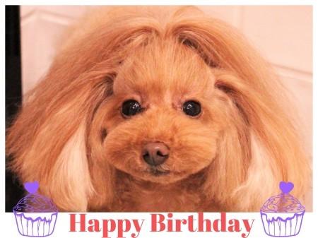 Happy Birthday ♡ アネラちゃん_d0060413_10462391.jpg
