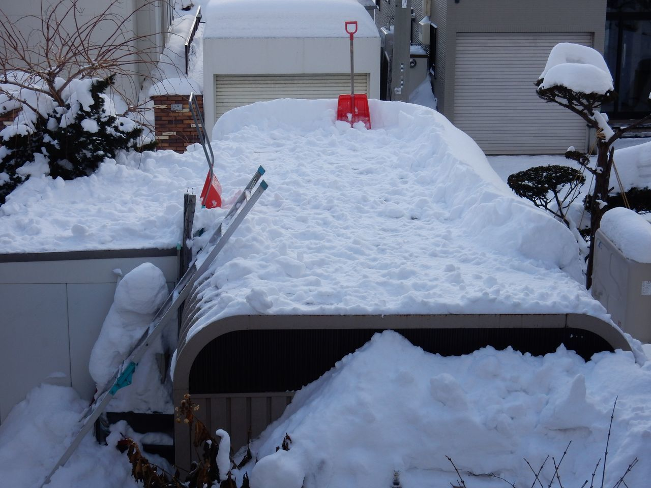真冬日でもとける雪_c0025115_21021299.jpg