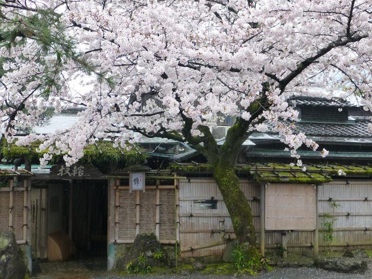 京都観桜編(19):嵐山公園(15.3)_c0051620_8393994.jpg