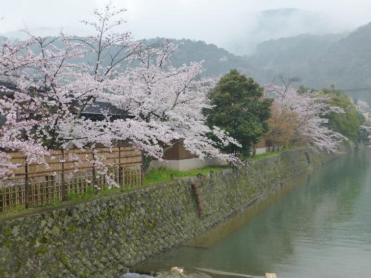 京都観桜編(19):嵐山公園(15.3)_c0051620_8395480.jpg