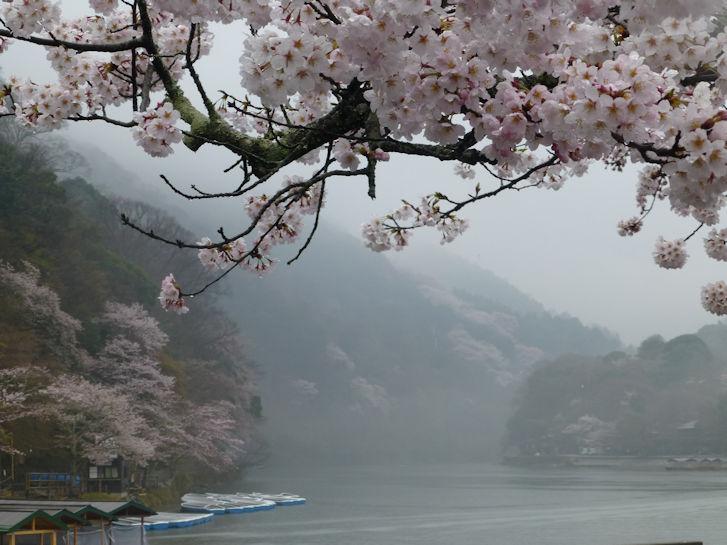 京都観桜編(19):嵐山公園(15.3)_c0051620_8402125.jpg