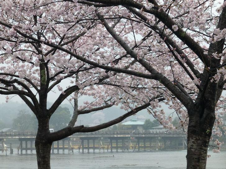 京都観桜編(19):嵐山公園(15.3)_c0051620_840951.jpg