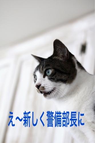 にゃんこ劇場「就任挨拶!」_c0366722_12075381.jpeg