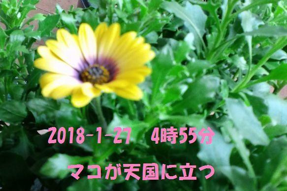c0025171_00481909.jpg