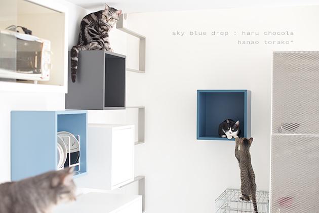 IKEAの家具で猫仕様その後2_d0355575_11333703.jpg