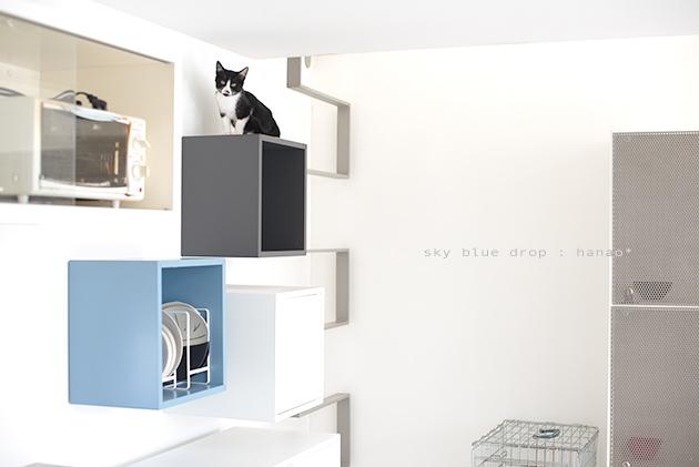 IKEAの家具で猫仕様その後2_d0355575_11333743.jpg