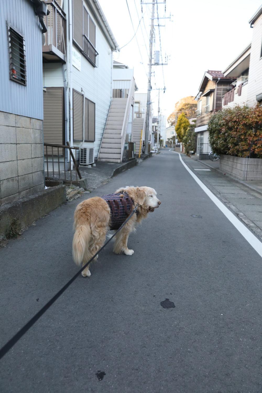 普通にお散歩してます♪_b0275998_13494530.jpg