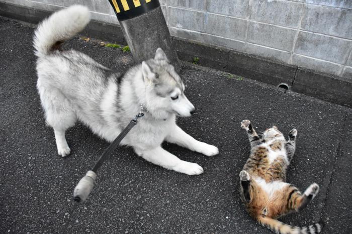 ジロちゃん祭り♪ (≧∇≦)_c0049299_20295025.jpg