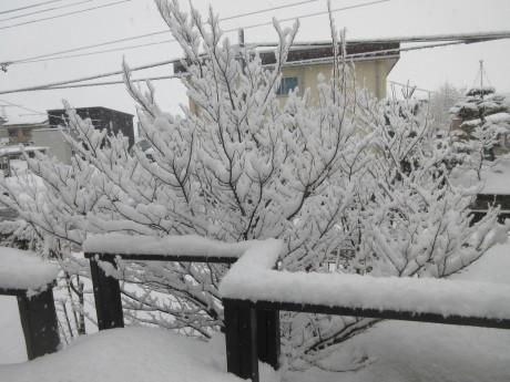 と、思えばまたも雪の朝_a0203003_09312869.jpg