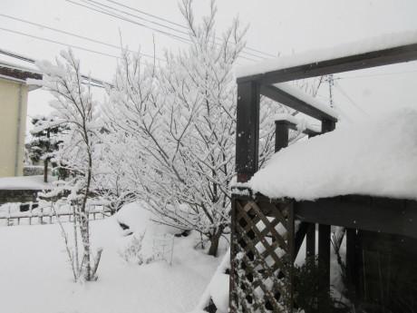 と、思えばまたも雪の朝_a0203003_09314839.jpg