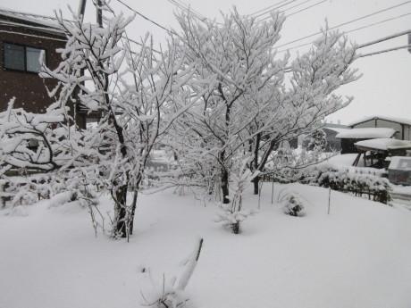 と、思えばまたも雪の朝_a0203003_09320284.jpg