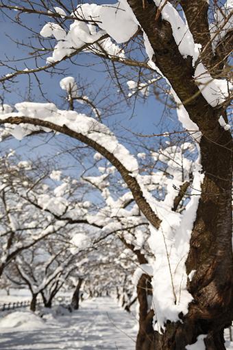 満開の雪_b0259218_23070171.jpg
