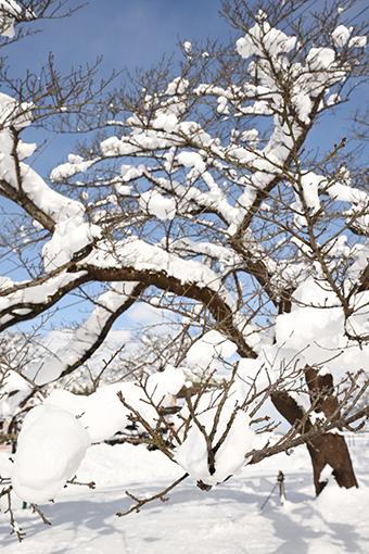 満開の雪_b0259218_23070779.jpg