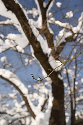 満開の雪_b0259218_23071892.jpg