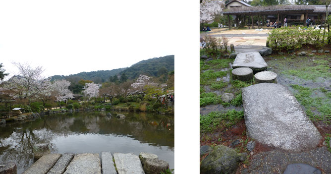 京都観桜編(22):円山公園・知恩院(15.3)_c0051620_17194692.jpg