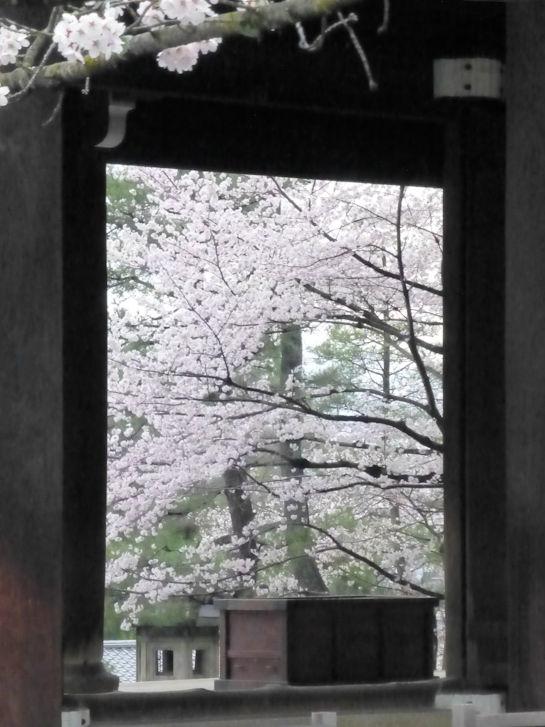 京都観桜編(22):円山公園・知恩院(15.3)_c0051620_17263837.jpg