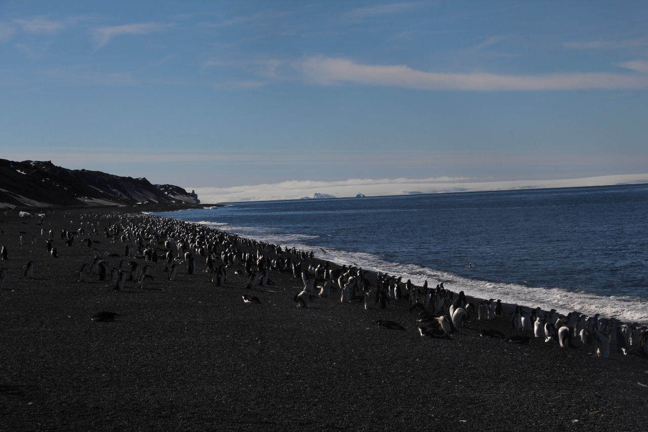 南極への旅(14) Deception Island  BAILY HEAD_c0011649_23250609.jpg