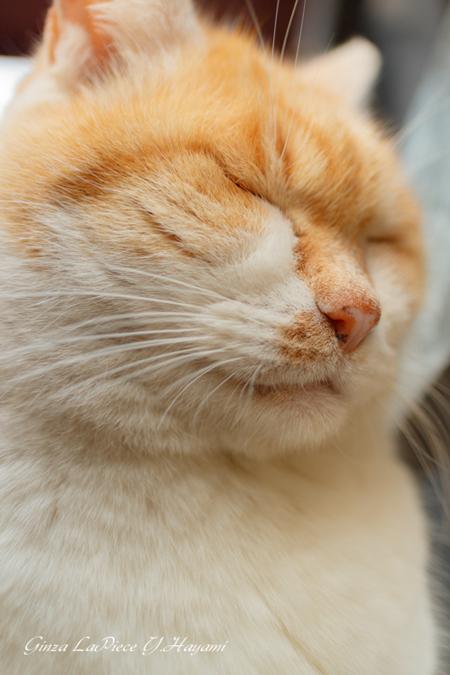 猫のいる風景 おねむのデブチン_b0133053_00465162.jpg