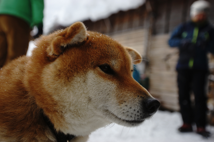 2018蛸始め 日光澤温泉_f0016656_22403990.jpg