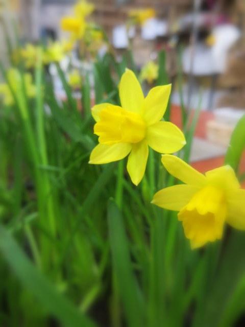 FLOWER FIELD Garden\'s*大感謝セール2/1(木)~12(月)_f0236260_15263556.jpg