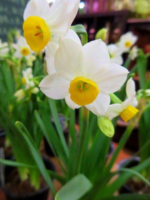 FLOWER FIELD Garden\'s*大感謝セール2/1(木)~12(月)_f0236260_15292588.jpg