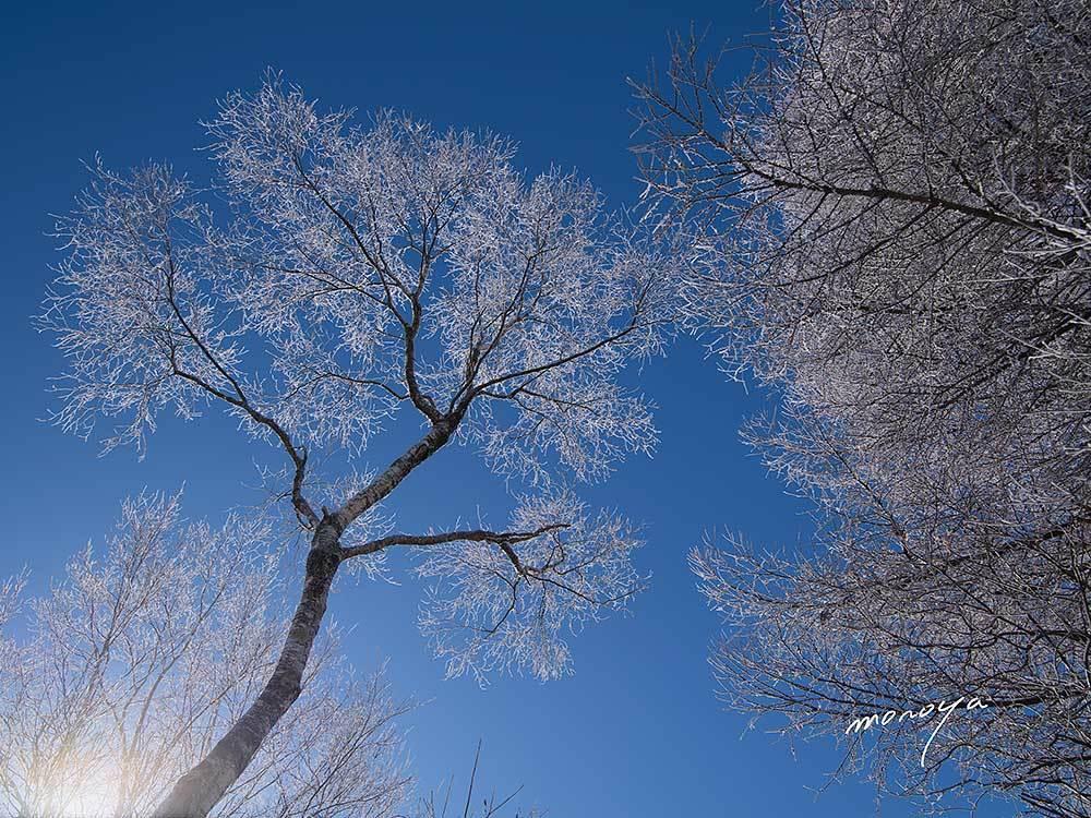 霧氷の白樺_c0085877_06450600.jpg