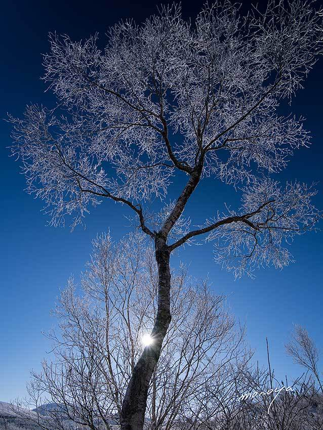 霧氷の白樺_c0085877_06451347.jpg