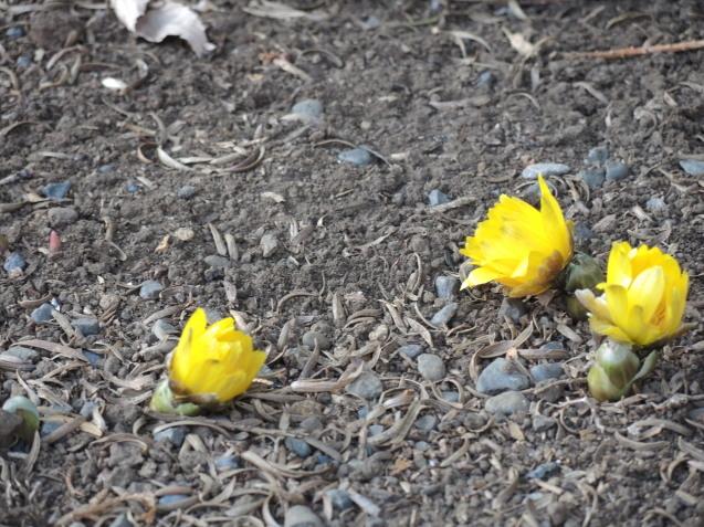 ♪小さい春、小さい春見つけた♪_e0232277_17135557.jpg