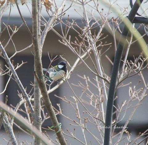 ◆可愛い鳥たち_e0154682_17204969.jpg